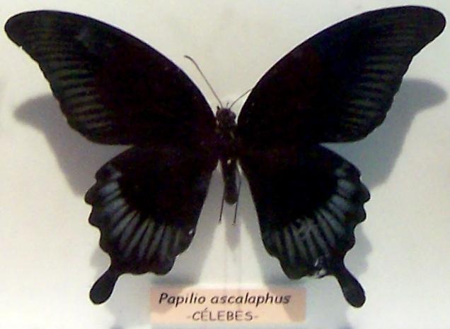 Mariposa negra: un relato de Jordi Pujolà